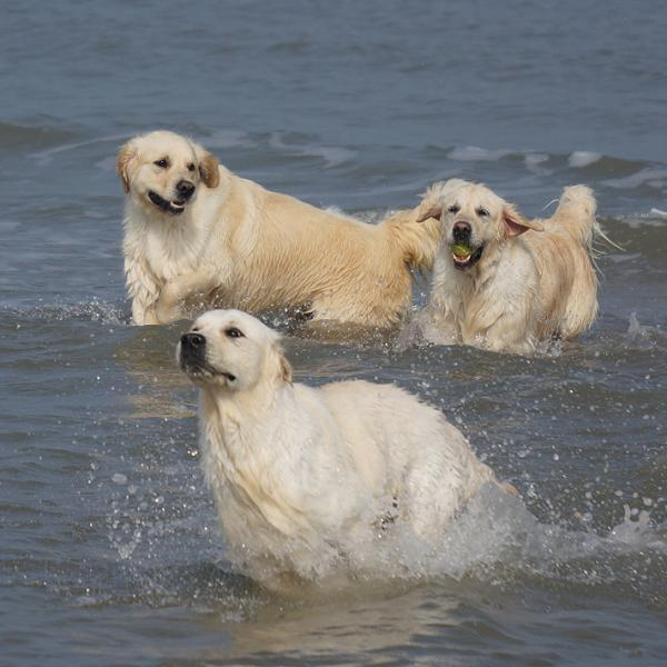 Dempy, Madde, Misty - Fun in the sea